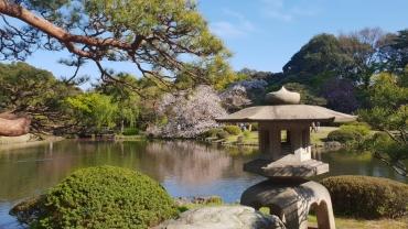 Un voyage au Japon fabuleux !